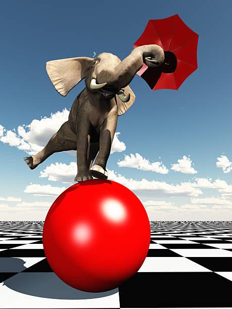 Elephant balancing on ball stock photo