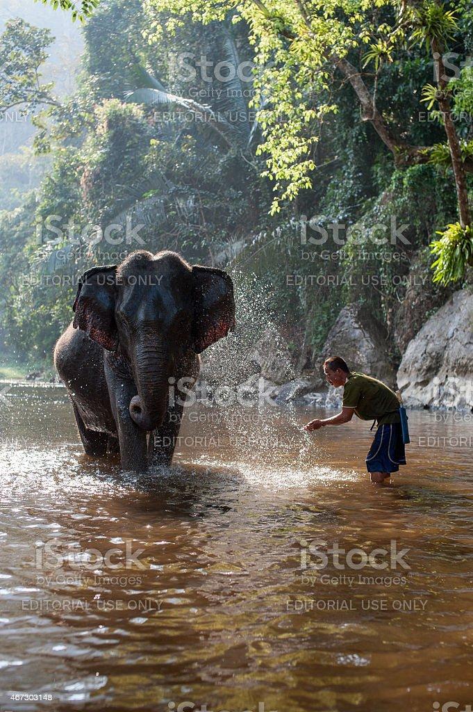 Elephant bathing stock photo