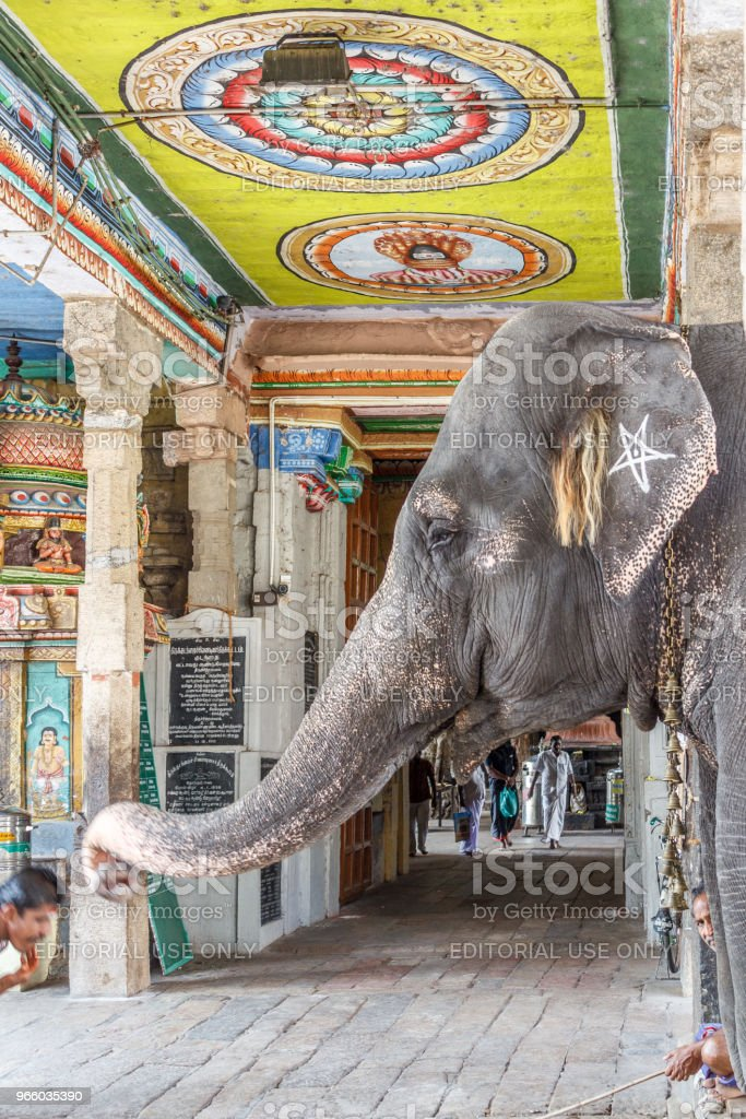 Elefant Segen einen Mann - Lizenzfrei Einzelnes Tier Stock-Foto