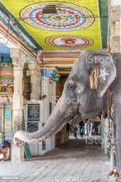 Elefant Segen Einen Mann Stockfoto und mehr Bilder von Einzelnes Tier