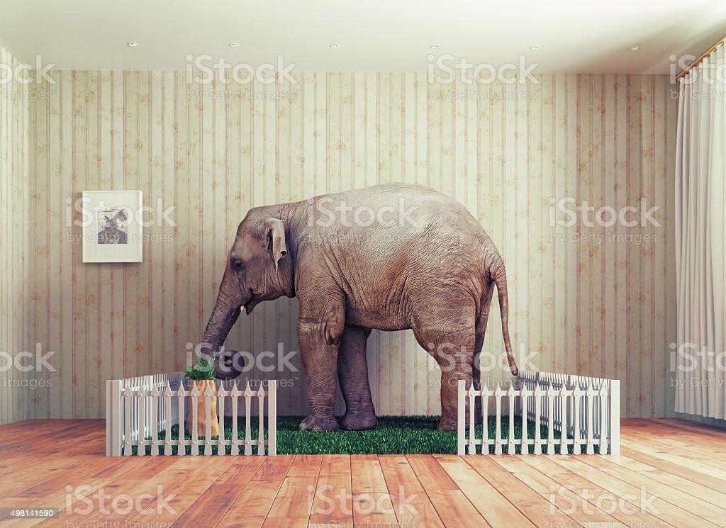 Cría de elefante-pet - foto de stock