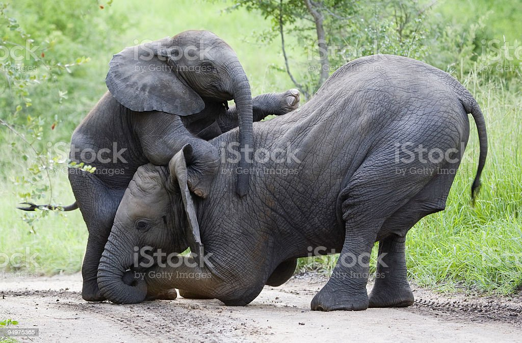 Elephant climbing frame stock photo