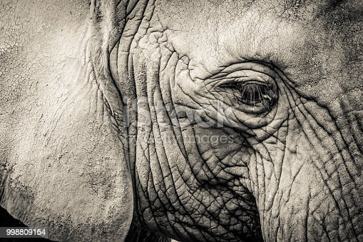 istock Elephant close-up with sad expression. The head of an elephant close-up. Vintage, grunge old retro style photo. 998809154