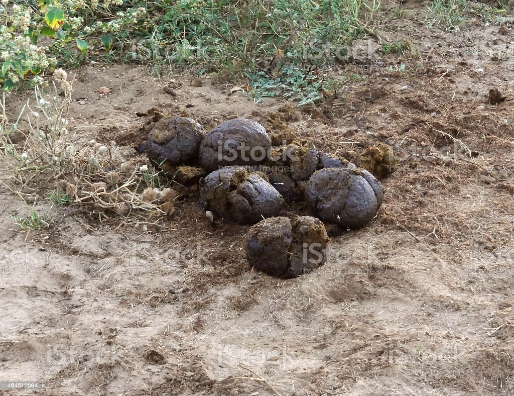 elephant crap stock photo