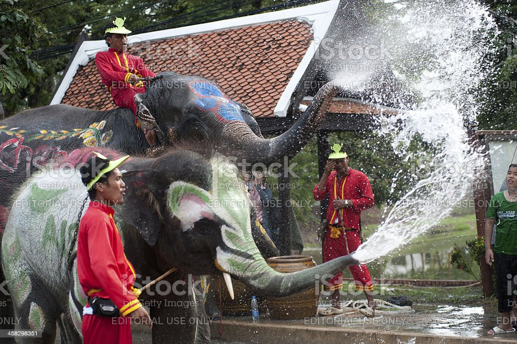 Elephant dance and play in water festival. stock photo