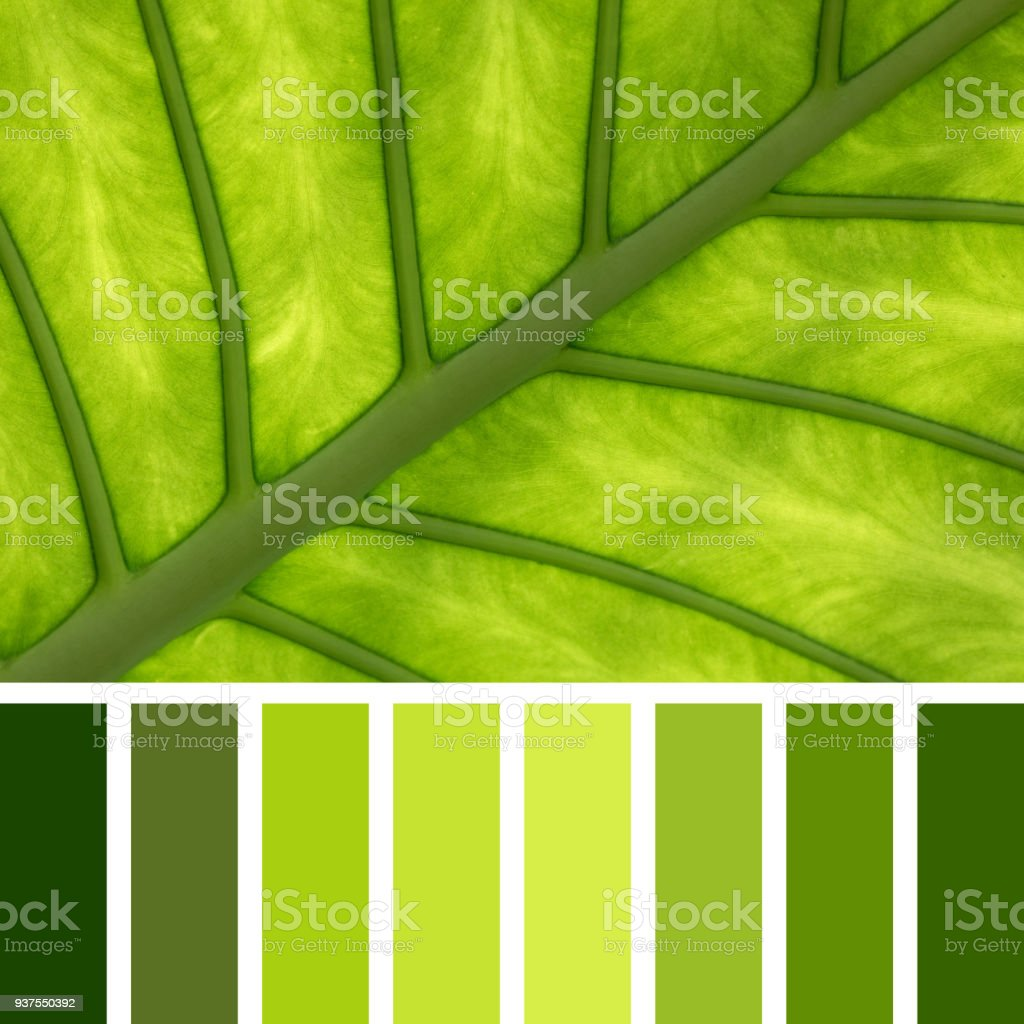 Elephant Ear Leaf Palette Stock Photo & More Pictures of Abstract ...