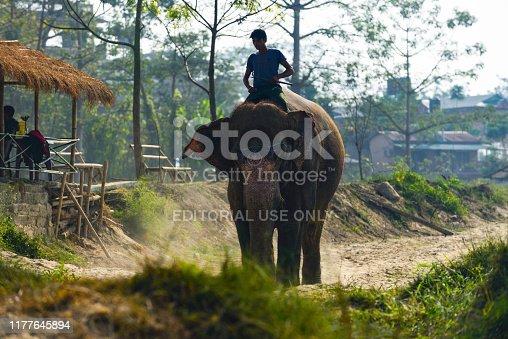 elephant elephants, Nepal, Chitwan National Park, November 2017