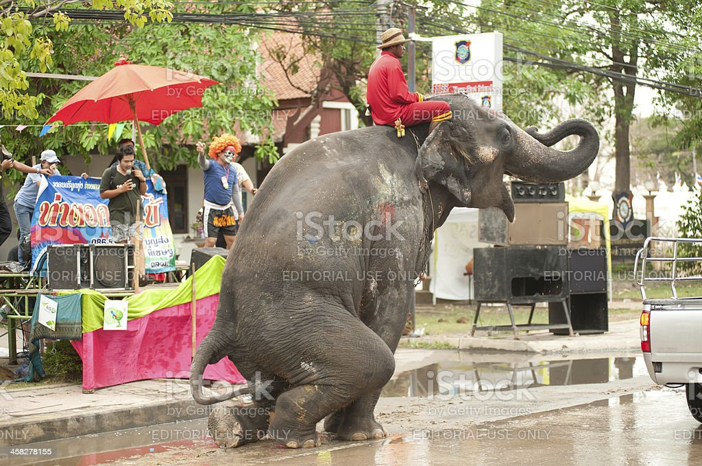 Elephant enjoy dance and play in water festival stock photo