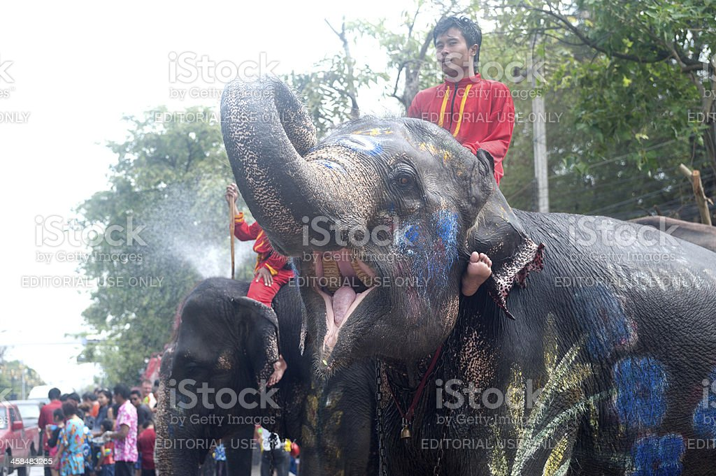 Elephant enjoy dance and play in water festival royalty-free stock photo