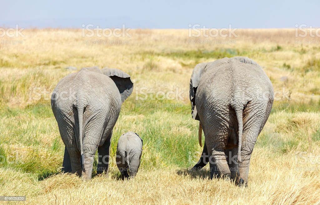 Elephant Family and Baby walking across Africa's Serengeti Savanna stock photo