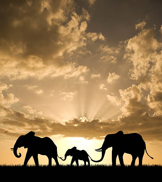 elefanten familie bei sonnenuntergang - elefanten umriss stock-fotos und bilder