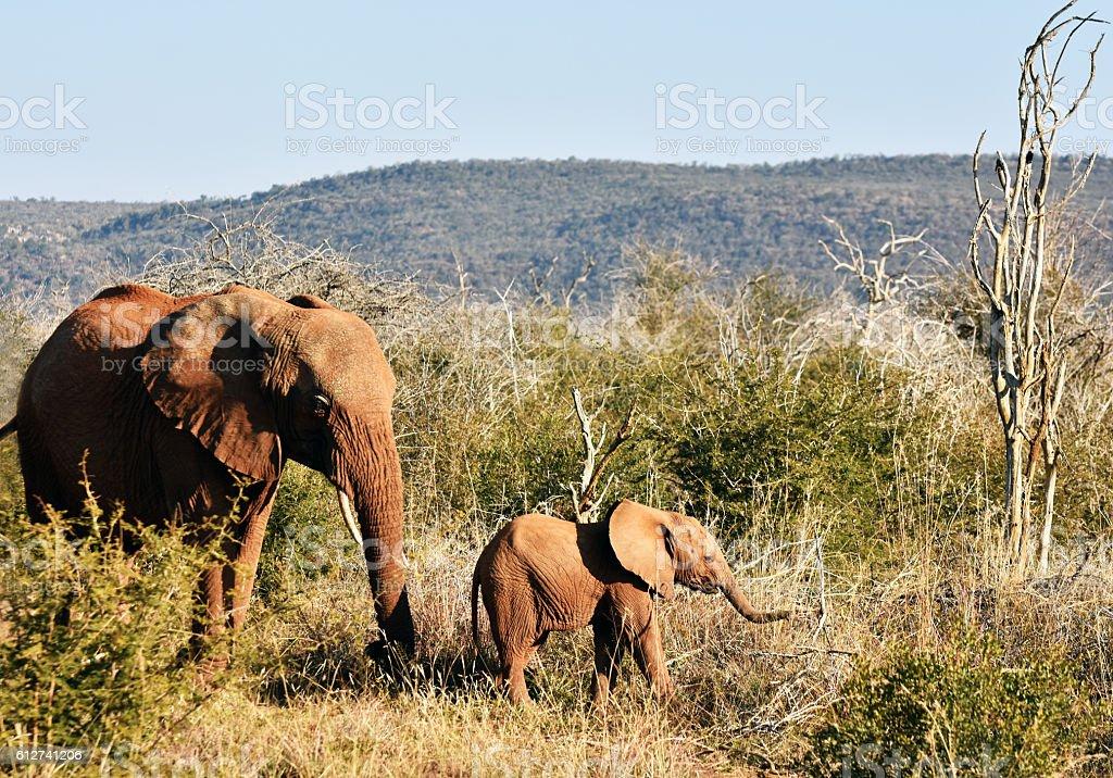 Elefanten Familie  – Foto