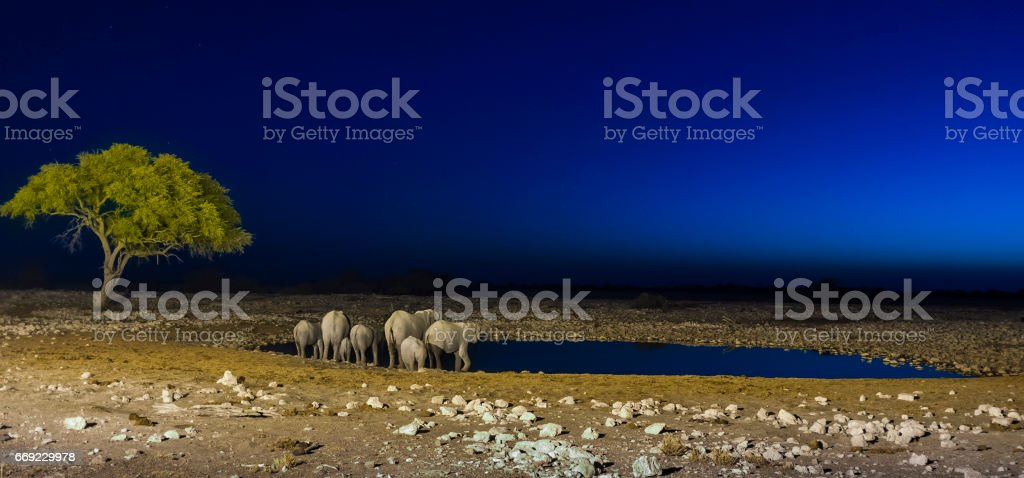 Elephant Family stock photo