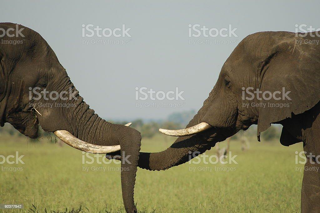 Elephant friendship royalty-free stock photo