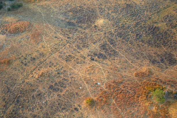 Elephant from the air in the Okavango Delta stock photo
