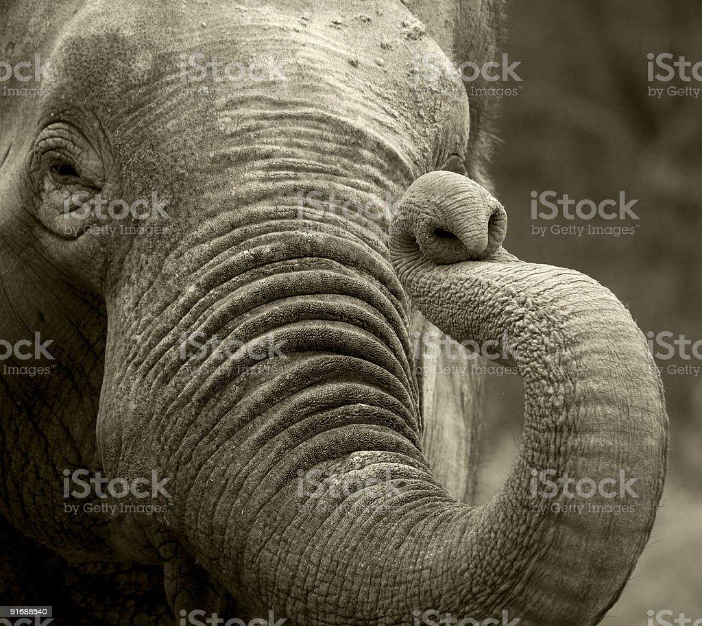 Elephant greeting stock photo