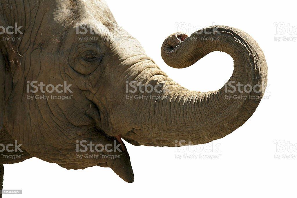 Elephant head royalty-free stock photo