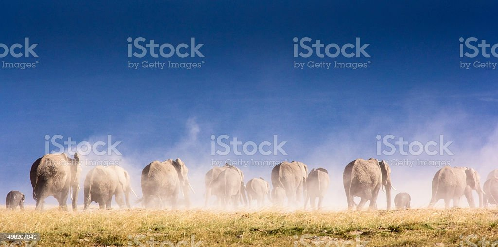 Elephant herd and Kilimanjaro lephant herd in dust storm - Amboseli, Kenya 2015 Stock Photo