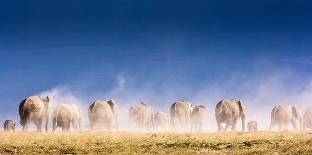 Elephant herd and Kilimanjaro stock photo
