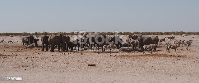 Elephant Herd at a Waterhole Panorama in Etosha National Park in Nostalgic Warm Colors
