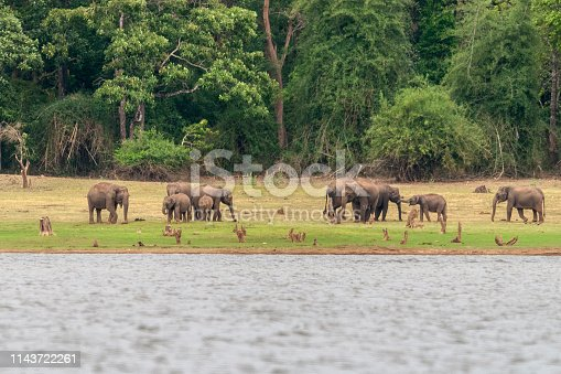 Elephant Herd on the banks of Kabini Dam,Kabini,Nagarhole,Karnataka,India
