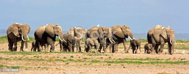 182061384 istock photo Elephant herd 174879835