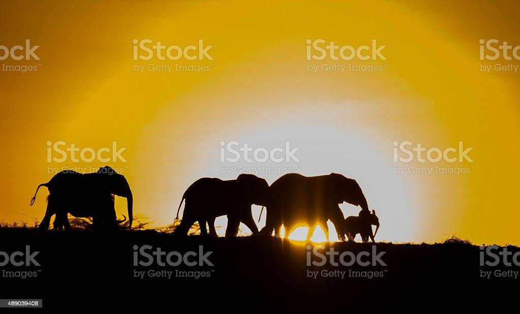 Elephant Herd Silhouette stock photo