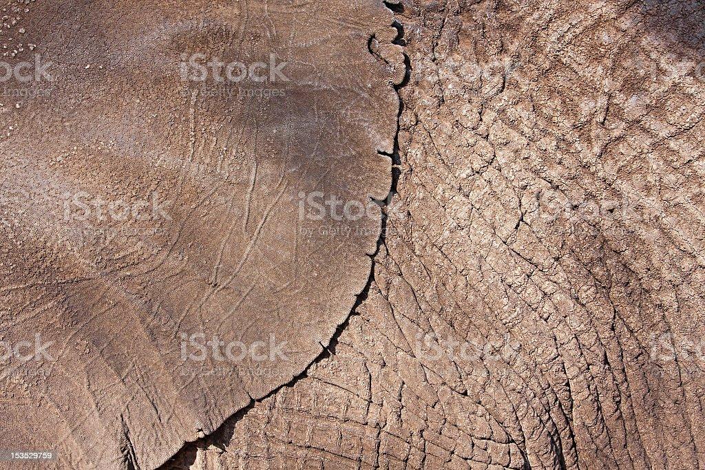elephant hide stock photo