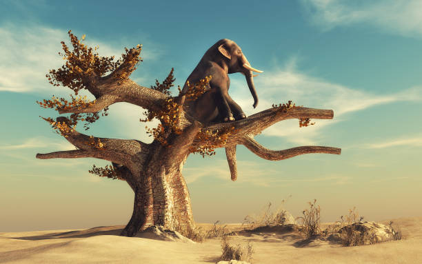 elephant in a dry tree in surreal landscape - dreamlike stock photos and pictures