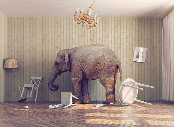 elephant in a room stock photo