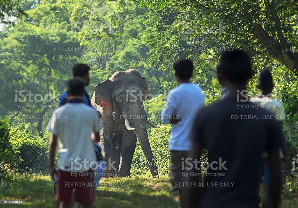 Elephant in a Tea Garden stock photo