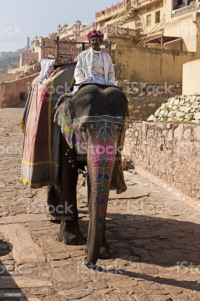 Elephant in Amber Fort, Jaipur, India stock photo