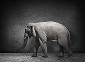 Elephant in domestic dark room
