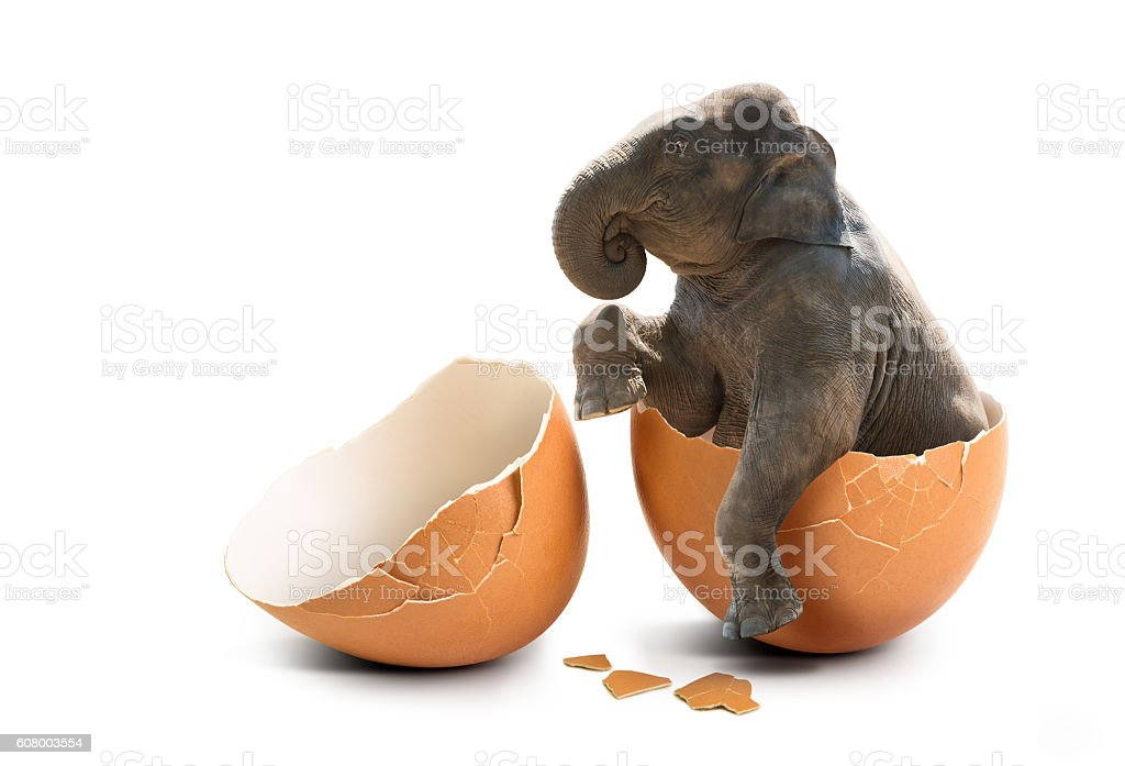 Elephant in eggshell stock photo