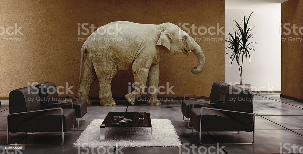 elephant in interior stock photo