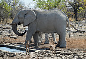 taken in Etosha National Park