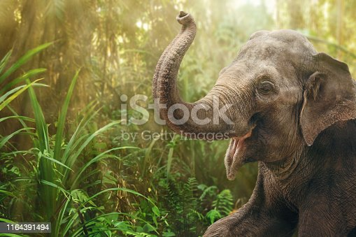 Portrait of an Indian elephant in the rainforest. The dense vegetation in the background is heavily blurred.