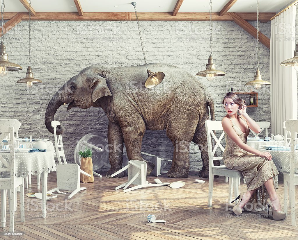 elephant  in  restaurant stock photo