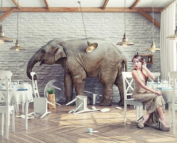 elefanten im restaurant - raumideen stock-fotos und bilder