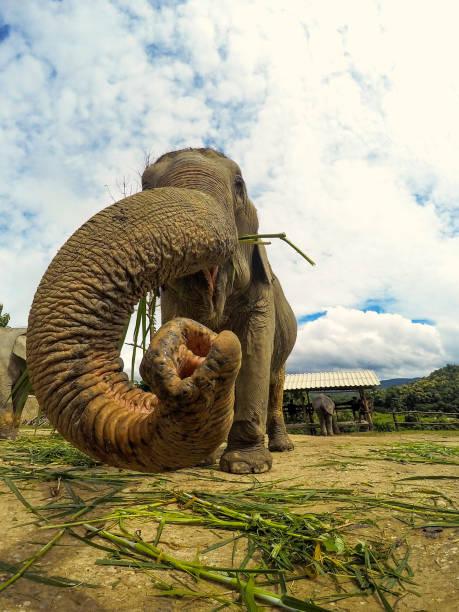 Elefant in Thailand – Foto