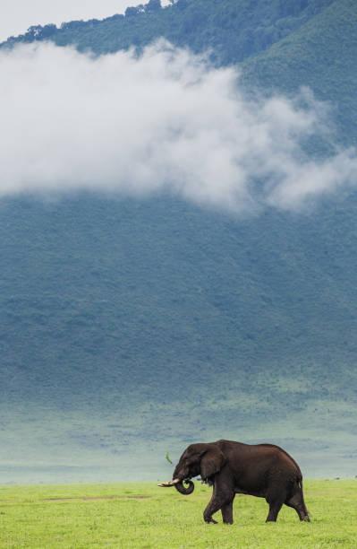 Elephant in the crater Ngorongoro against the background of fog. stock photo
