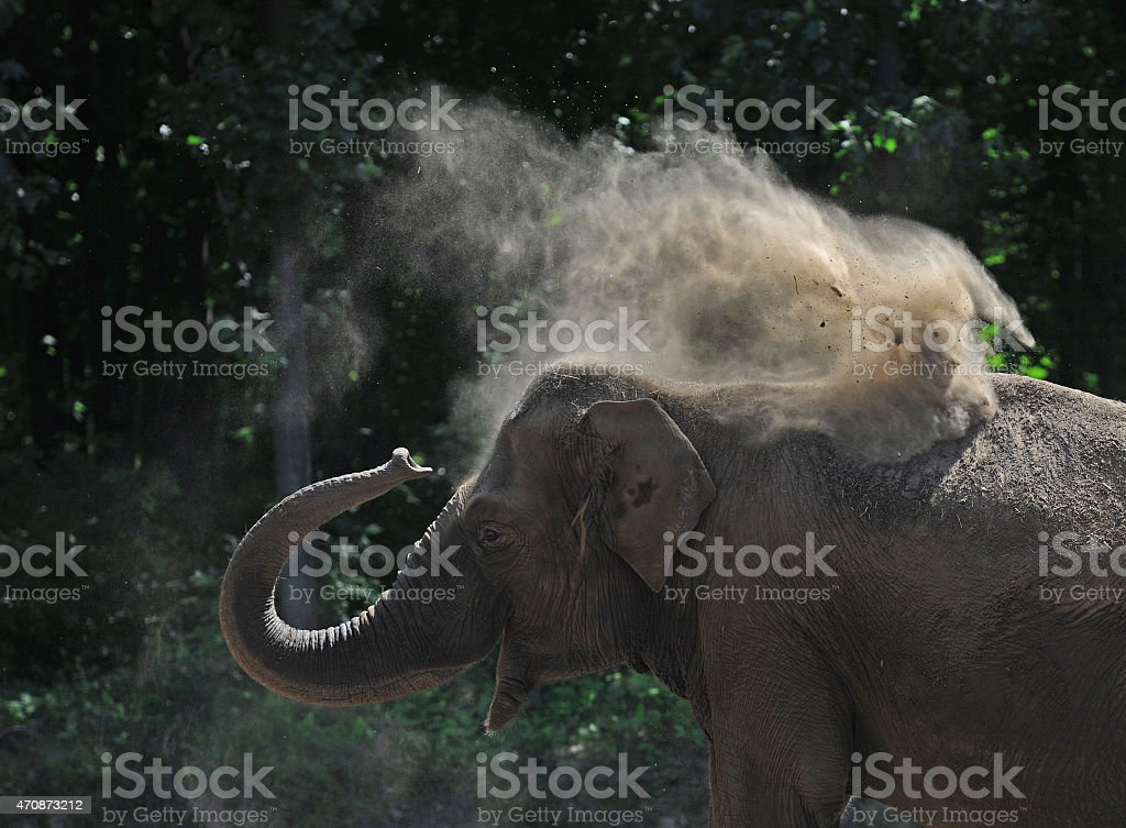 elephant in the dust stock photo