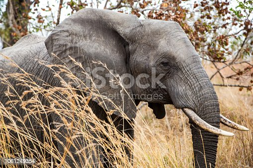 Side view of an elephant standing in the grass