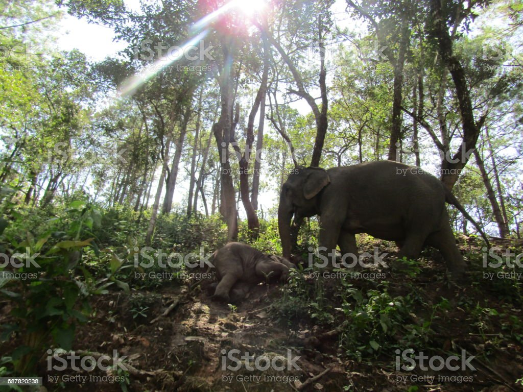 Elephant in the jungle stock photo