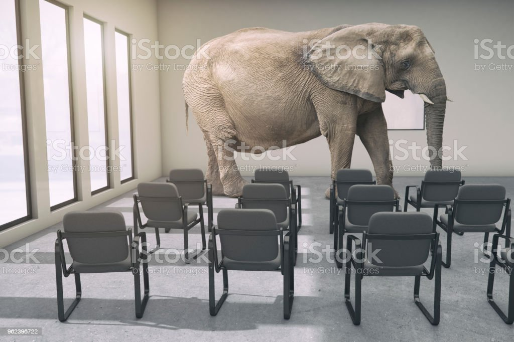 The metaphor of the elephant in the room. A large African elephant in...