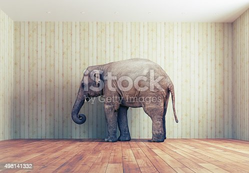 istock Elephant in the room 498141332