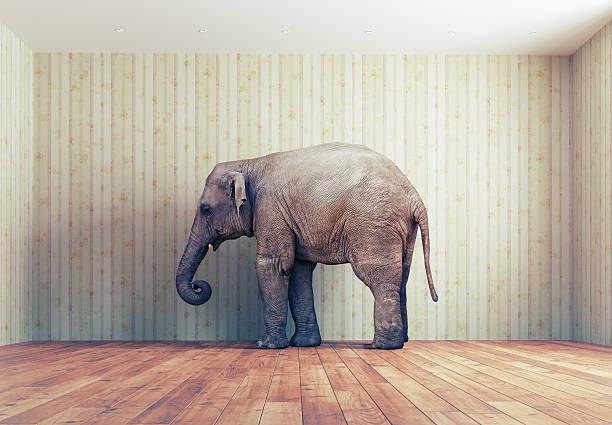 Elefante en la habitación - foto de stock
