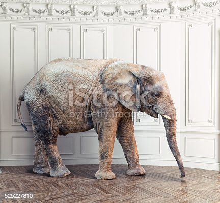 istock elephant  in the room 525227810