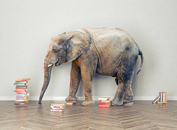 Royalty Free Elephant In The Room Pictures, Images and Stock ...