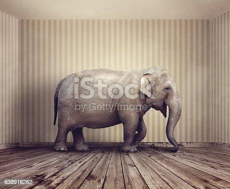 istock Elephant in the room 638916262